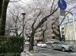 tokiwa_10.jpg