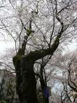 tokiwa_11.jpg