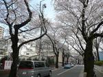tokiwa_13.jpg