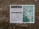 tokiwa_15.jpg