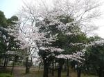 tokiwa_17.jpg