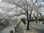 tokiwa_27.jpg