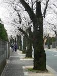 tokiwa_30.jpg