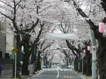 tokiwa_32.jpg