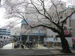 tokiwa_39.jpg